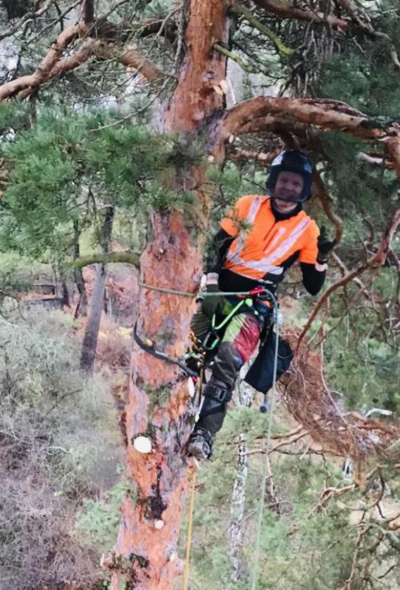 Victor Trädfällare & ArboristLinds trädfällning